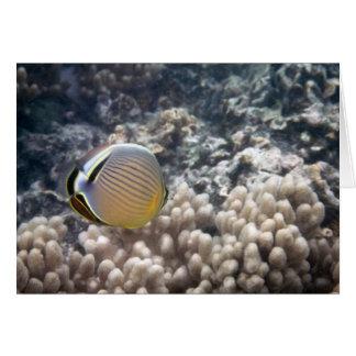 Redfin Butterflyfish (Chaetodon lunulatus) Card