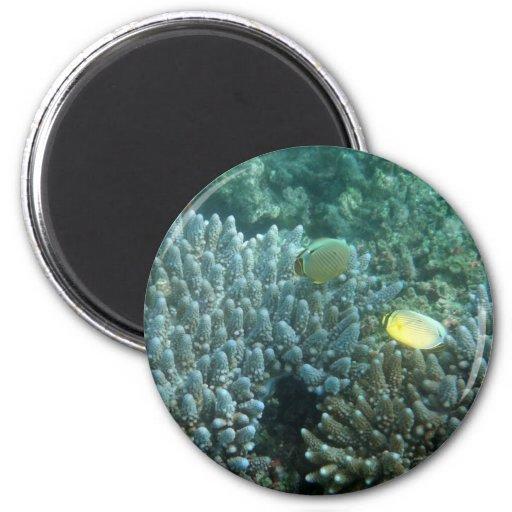 Redfin Butterflyfish (Chaetodon lunulatus) 2 Inch Round Magnet