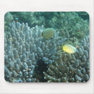 Redfin Butterflyfish (Chaetodon lunulatus) Mouse Pad