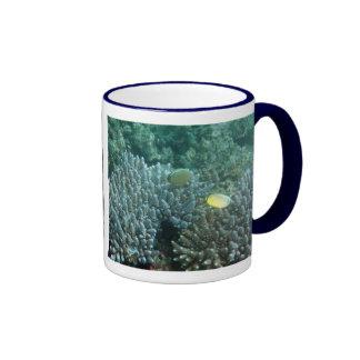 Redfin Butterflyfish (Chaetodon lunulatus) Ringer Mug