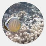 Redfin Butterflyfish (Chaetodon lunulatus) Classic Round Sticker