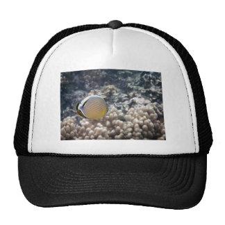 Redfin Butterflyfish (Chaetodon lunulatus) Trucker Hat