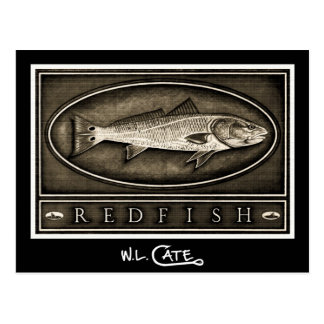 Redfish Vintage Black & White Postcards