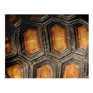 Redfoot Tortoise Shell Post Cards