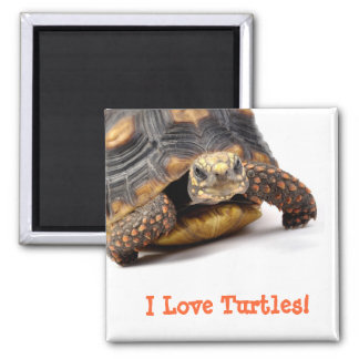 Redfoot Turtle Gifts 2 Inch Square Magnet