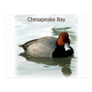 Redhead Duck Postcard