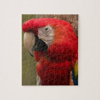 Redhead Jigsaw Puzzle