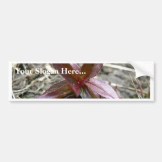 Redish Plant Sprout Bumper Sticker