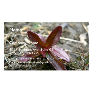 Redish Plant Sprout Business Card