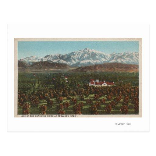 Redlands, CA - Mountain & Orchard Scene Postcards