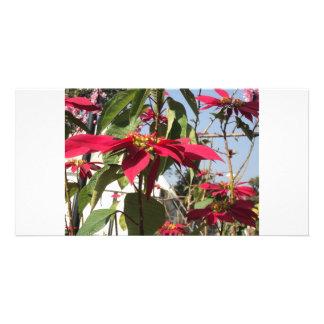redness everywhere card
