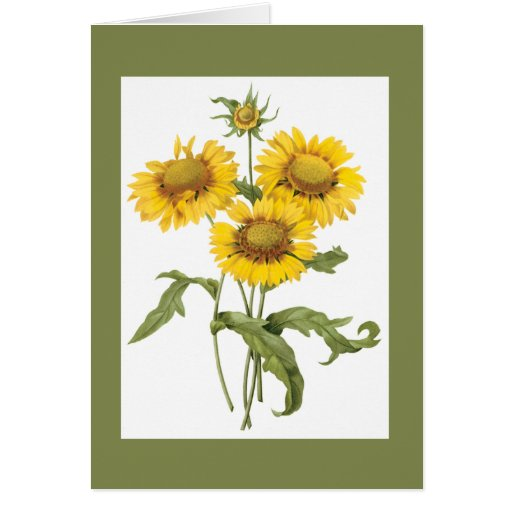 Redoute Blanket Flower Notecard Stationery Note Card