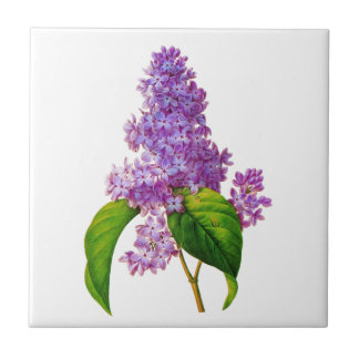 Redoute Lilacs Small Square Tile