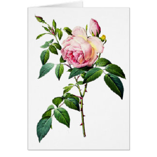 Redoute Pink Roses Card