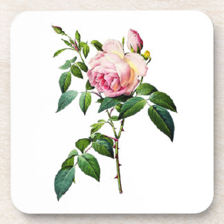 Redoute Pink Roses Coaster