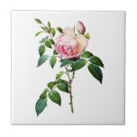 Redoute Pink Roses Small Square Tile