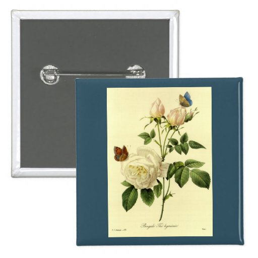 Redoute Print: 'Bengal Rose Hymanee' 2 Inch Square Button