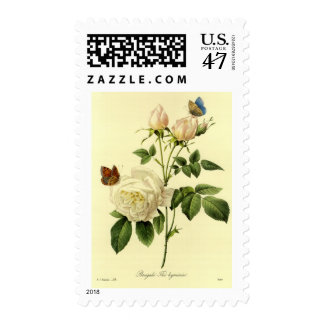 Redoute Print: 'Bengal Rose Hymanee' Postage