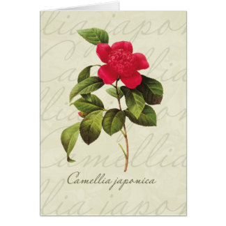 Redoute Red Camellia Botanical Print Note Cards
