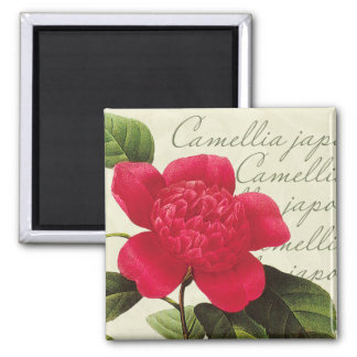 Redoute Red Camellia Botanical Print Square Magnet