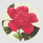 Redoute Red Camellia Botanical Print Stickers