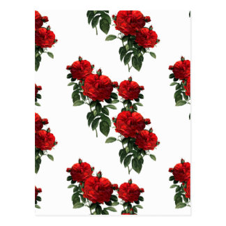 Redoute' Red Roses Postcard