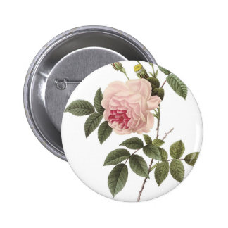 Redoute Rose 2 Pinback Button