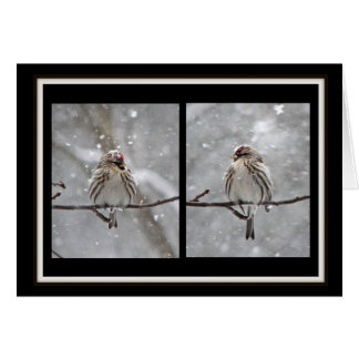 Redpolls dreaming of spring... greeting card