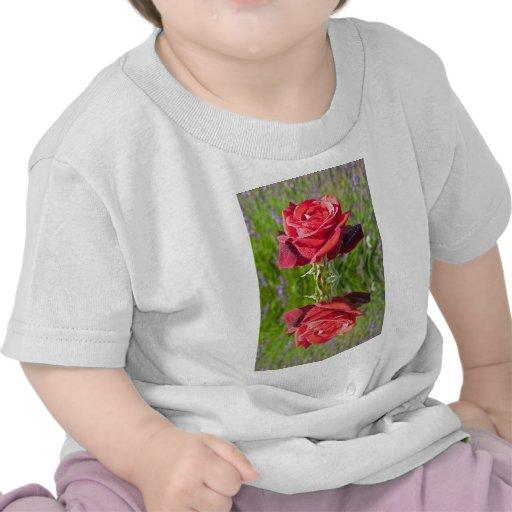 RedRoseReflect.jpg Camisetas