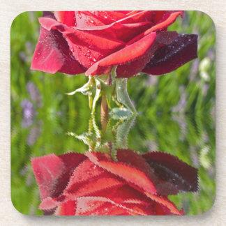 RedRoseReflect.jpg Coaster