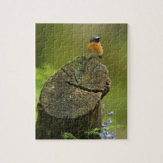 Redstart (phoenicurus del Phoenicurus) en caído Puzzle Con Fotos