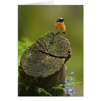 Redstart (Phoenicurus phoenicurus) on fallen Greeting Card