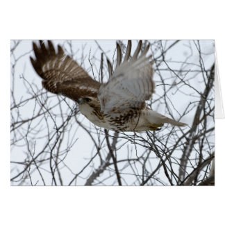 Redtail Hawk Card
