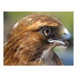 Redtail Hawk Customized Letterhead