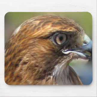 Redtail Hawk Mouse Pad