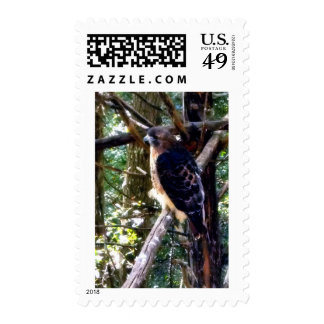 Redtail Hawk on a Branch Stamps