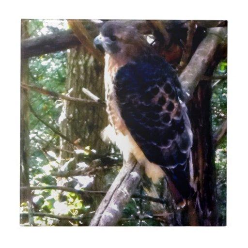 Redtail Hawk on Branch Tiles