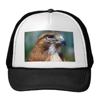 Redtail Hawk Trucker Hat