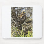 Redtailed Hawk Mousepad