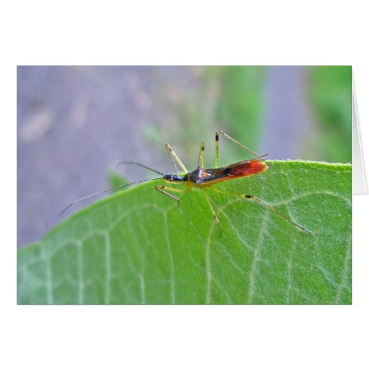 Reduviid Red Assassin Bug Note Card