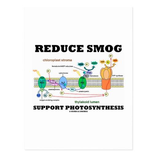 Reduzca la fotosíntesis de la ayuda de la niebla c postal