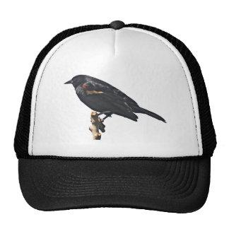 Redwing Blackbird Gift Mesh Hats