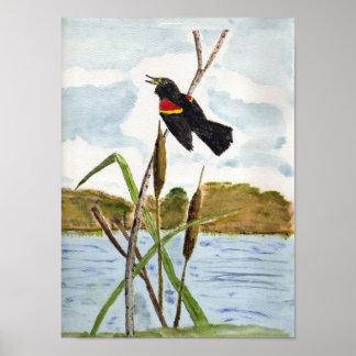 Redwing Blackbird Print