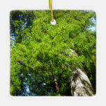 Redwood Boughs in Redwood National Park Ceramic Ornament