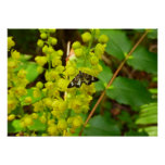 Redwood Butterfly and Wildflowers Poster