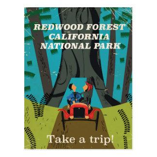 Redwood California vintage travel poster Postcard