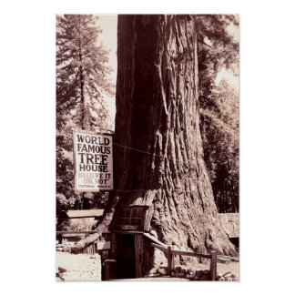 Redwood City California The Fraternal Monarch Print