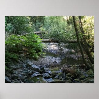 """Redwood Creek"", Muir Woods Poster"