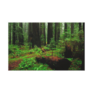 Redwood Forest Stretched Canvas Print