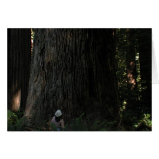 Redwood Forest Greeting Cards